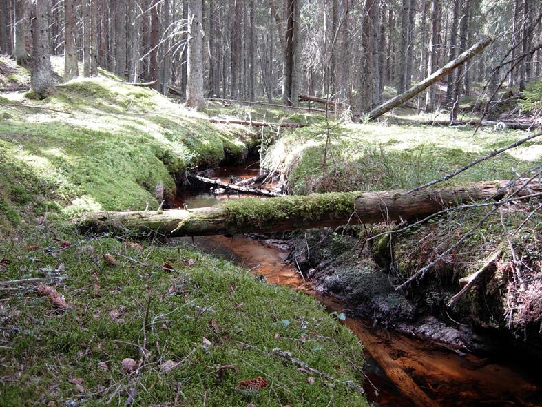 Det här är resterna av en gammal isälv på Röda Jorden, som transporterade de lösa järnpartiklar som lagrade sig i stora depåer till det vi idag kallar rödjord. Det kunde användas till att göra järn. Här på Röda Jorden ligger Sveriges hittills första kända plats för järnframställning.